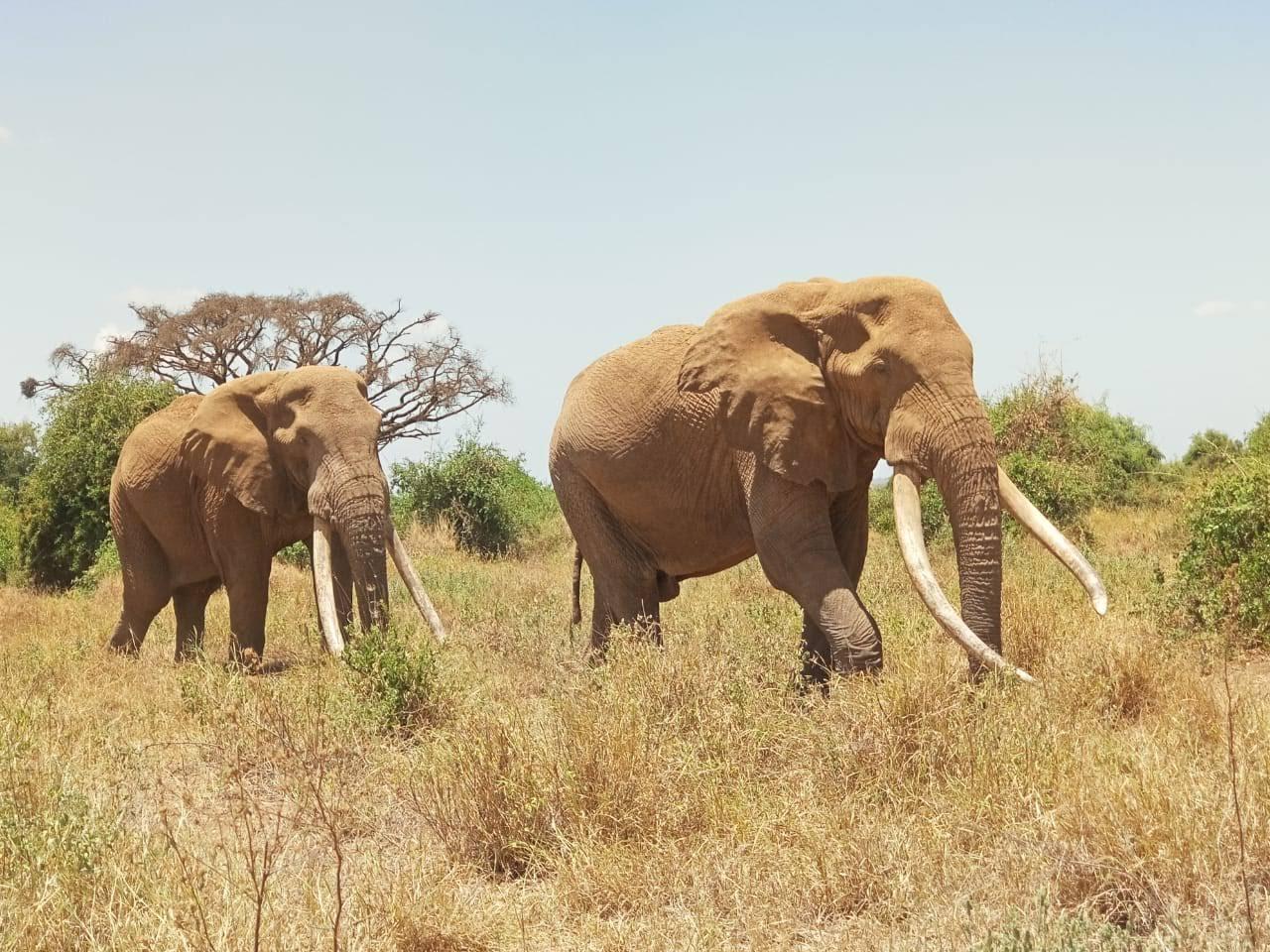 elefantes en el parque nacional de samburu, kenia