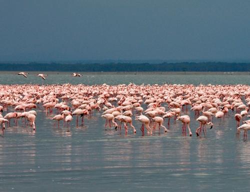 P. N. Nakuru y lago Naivasha