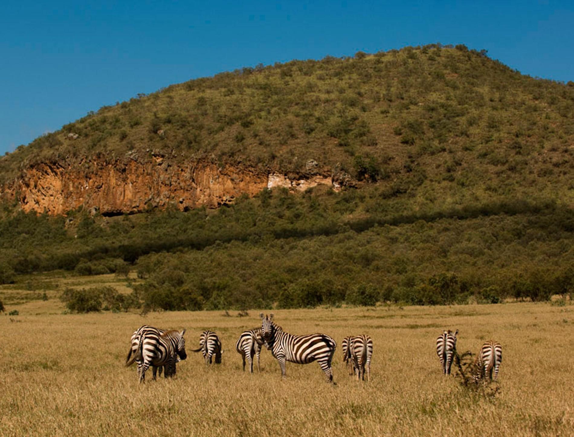 cebras en el parque nacional de hells gate, kenia