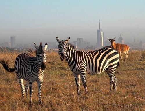 P. N. de Nairobi, Elephant Orphanage y Giraffe Centre