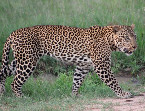 R. N. Masai Mara y P. N. Nakuru
